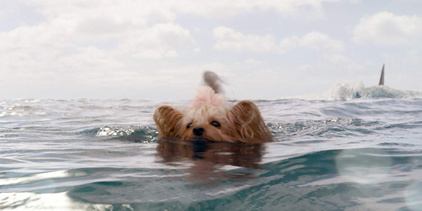Dog in The Meg