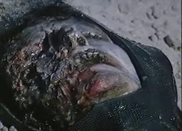 Jaws 5 Cruel Jaws - Corpse